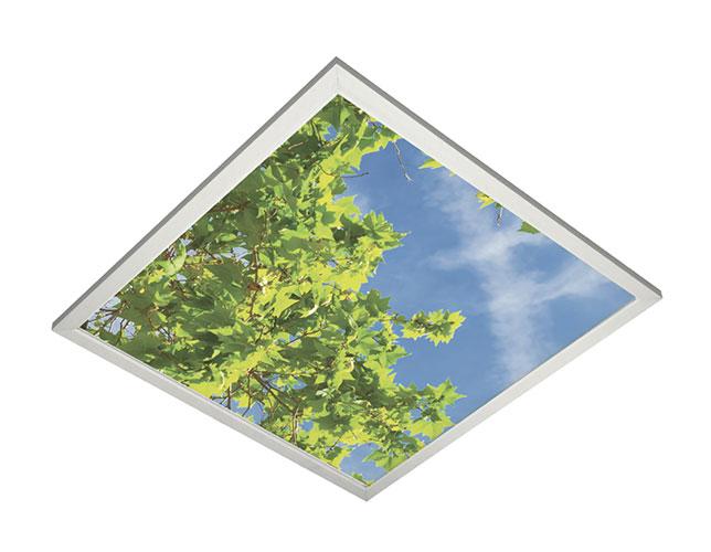 Vista Image